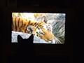 Cat's life