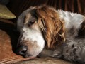 Angus Sleeps