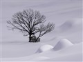 Tree in snow 2