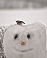 Bird Brain Snowman.