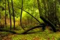 2014 muir woods-288