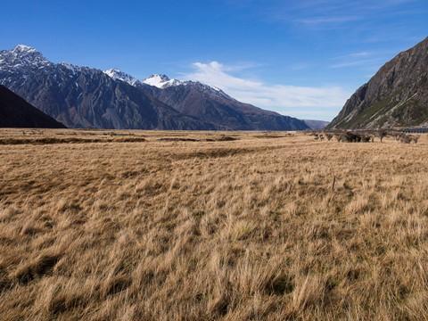 Alpine Tundra - Mt Cook Natoional Park