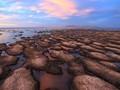 Stromatolites, the Original Living Fossils