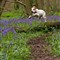 20120504_Hugo Highwoods_0670 ps