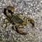 Burkett Lake and Vantage Reptiles-20160916-0004