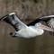 pelican16052020_663v2: OLYMPUS DIGITAL CAMERA