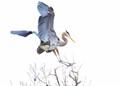 Big Bird, Little Branch