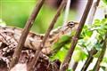 Open Cam on Hidden Chameleon