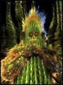Prickly alien