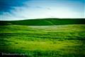Greenhill1