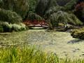 garden in Oberon, NSW