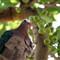 Birds (HONG KONG)