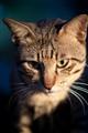 Wondering cat