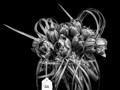 CUT FLOWER ARRANGEMENT