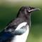Pine River Park Birds-20160605-0054-Edit