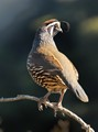 A partridge in a tree