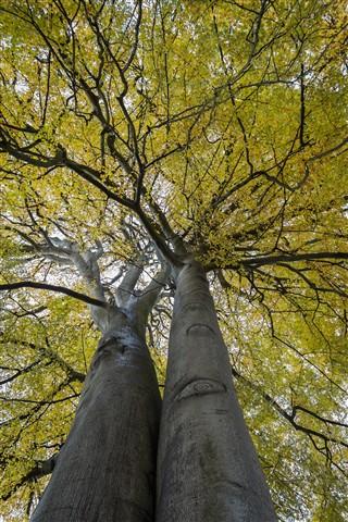 yellow tree - rudolph van graan