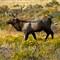 RMNP Elk1010_13037