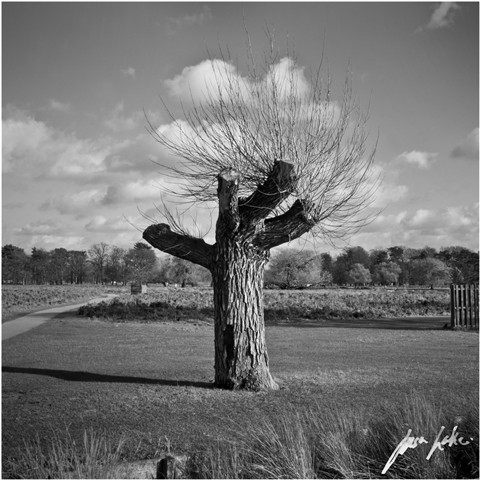 Tree. 01