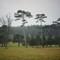 Waddesdon trees