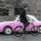 man_bicycle_pink_car