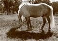 Horse at fraternal cemetery. Sevastopol. Ukraine