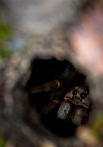Spied a Spider