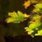 Fall Colors-6