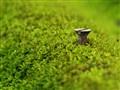 Screwed Moss