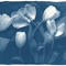 Tulips01_Blue_750