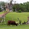 Harambe Wildlife Reserve