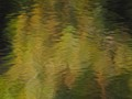 Billabong autumn reflections