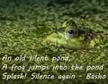 Frog in Pond Haiku