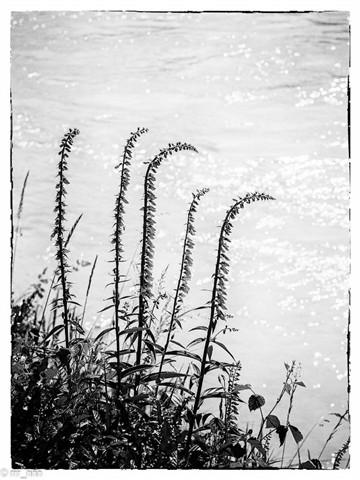 Flowers on the riverside of the Rhône