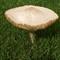 Mushroom After Heavy Rain