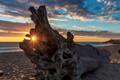 Stump Sunset