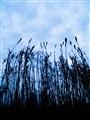 blue grass sky