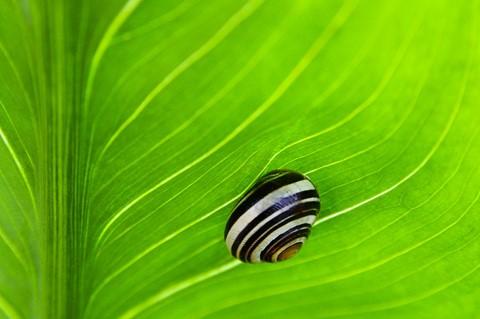 My leaf