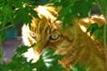 2008-05-29 Sparky