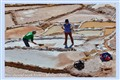 You should work faster - Maras salt fields - Peru