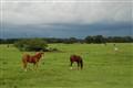 Pasture Storm