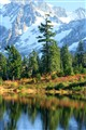 Reflection Lake, October color,& Mt Shuksan in the background