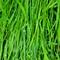 Grassdrops in the morning