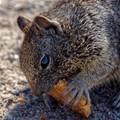 Squirrel Enjoying a Tasty Treat