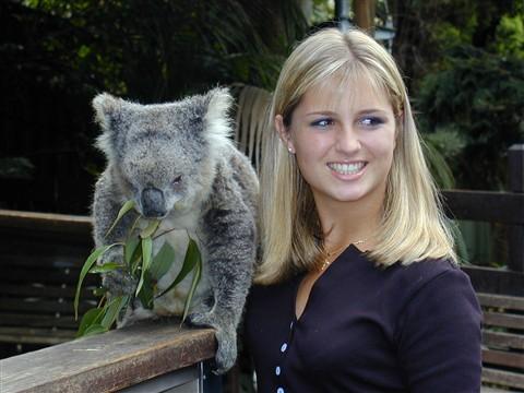 AJ koala 1