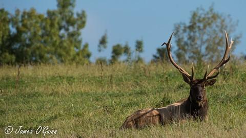 Benezett-Elk