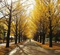 Hikarigaoka Park, Tokyo