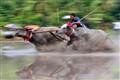 Sumbawa Bull Race