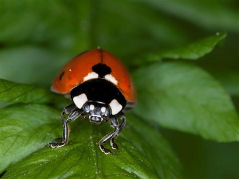 Bugs2013-1LR4