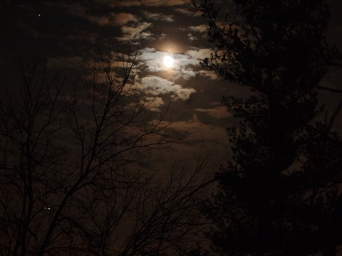 moon and trees-1